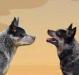 Pups verwacht